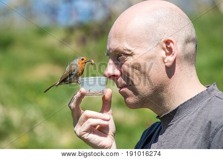 Bald Man Feeds A Robin A Mealworm From A Pot Under His Nose