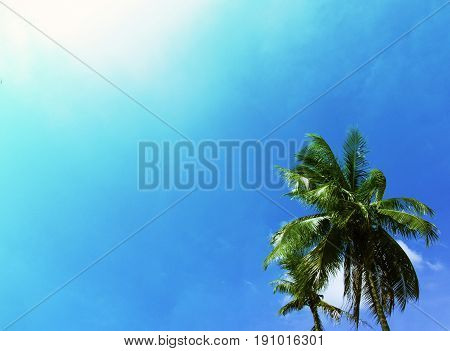 Tropical summer sky with palm tree. Tropical island vivid toned photo. Exotic vacation banner template with place for text. Coco palm tree on turquoise sky background. Coconut palm leaves in sunshine