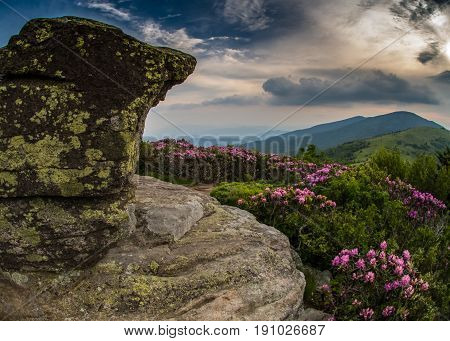 Rocky Lookout On Jane Bald With Rhododendron