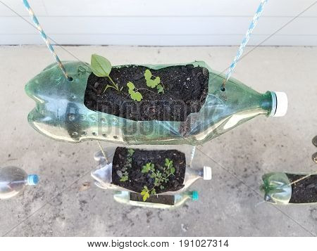 plastic soda and water bottles used to grow plants