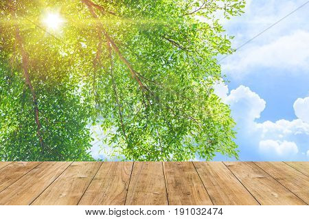 Park Outdoor Nature Green Tree With Blue Sky Sun Light With Wood Floor For Background.