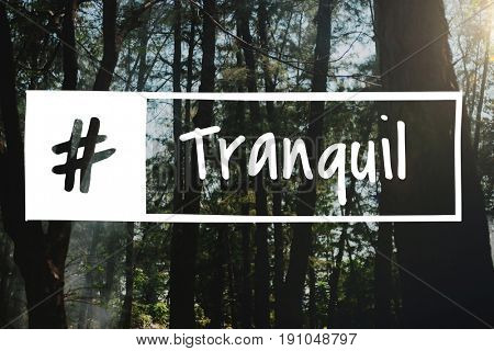 Tranquil forest network connection graphic