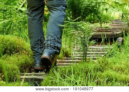 Man walking along a wooden path through the green forest