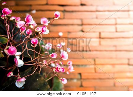 Small pink flower and the red brick floor