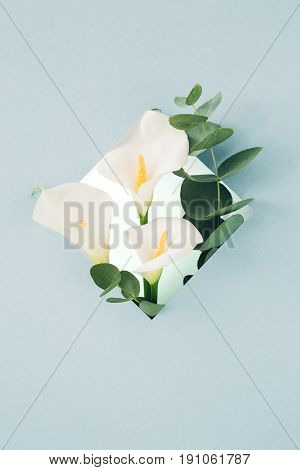 bouquet of white callas and eucalyptus in a frame on a blue background