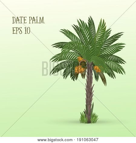 Raster illustration of Date palm tree with ripe fruits dates on light green background
