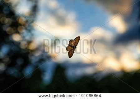 The night butterfly rests on a dusty window glass at sunset.