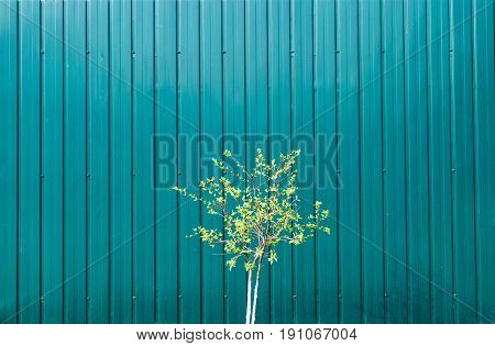 Small Green Tree On Green Mettalic Background, Free Space