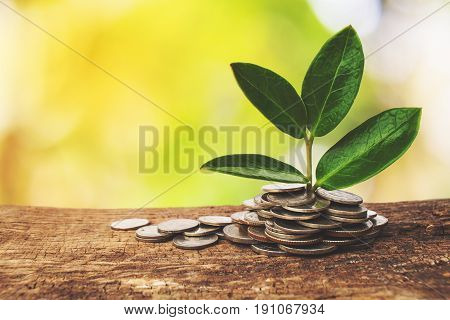 The business growth profit, Concept grow profit.