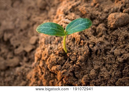 Planting forests to reduce global warming Concept afforest.