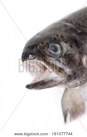 Head of trout fish isolated on white background