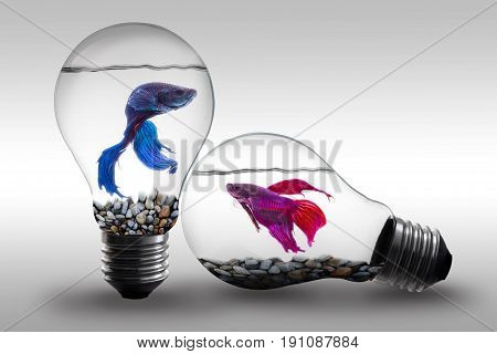 Fish in water inside an electric light bulb Concept and Idea background