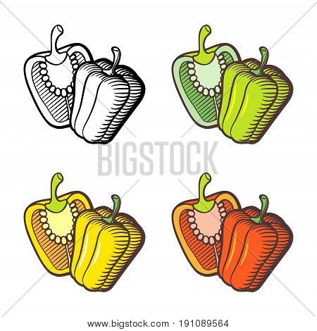 Illustration of bell pepper. Whole pepper and cross section. Red yellow green pepper and outline version. Stylized vector illustration isolated on white