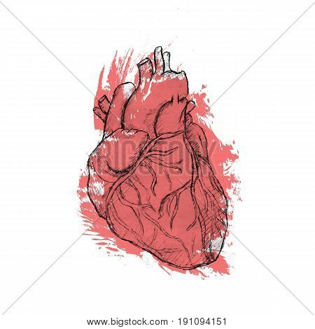 Hand drawn human heart. Anatomy doodle. Black and white vector illustration, red watercolor coloring
