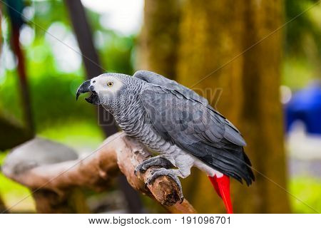 Wild parrot bird sitting on the branch