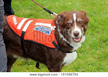 Beaulieu, Hampshire, Uk - May 29 2017: Dog Belonging To The Hampshire Search And Rescue Team