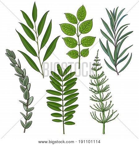 Set of tree twigs, branches with fresh green leaves, summer season decoration elements, sketch vector illustration isolated on white background. Hand drawn green foliage, twigs, branches with leaves