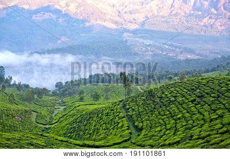 Tea Plantations In Munnar, Kerala, South India