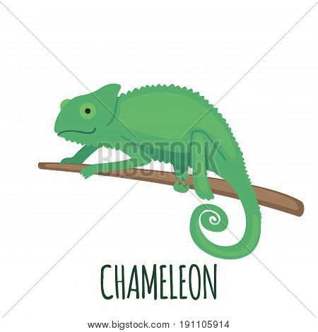 Cute Chameleon in flat style isolated on white background. Cartoon chameleon. Zoo animal. Vector illustration.