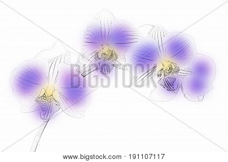 Figure orchids phalaenopsis on a white background
