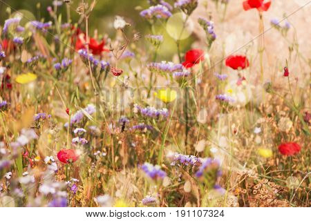 Summer Time Dreamy Bokeh Background With Wildflowers On Field.