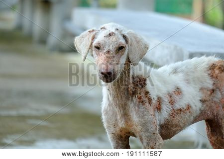 A lonely stray dog suffering skin problems