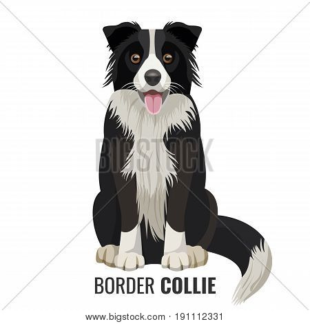 Border Collie pet sits isolated on white with its name below vector illustration. Big domestic realistic dog with open mouth