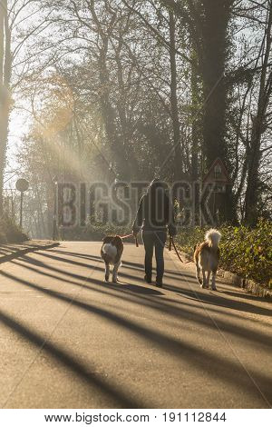 Spring walk in the forest with two Saint Bernard