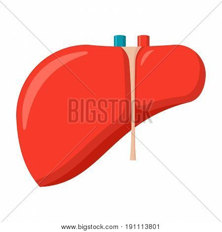 Hepatology concept with liver, vector illustration in flat style