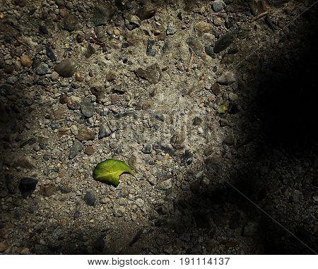 Green leaf on the pavement. Asphalt background. Leaf. Asphalt texture. Gray background. Grunge background.