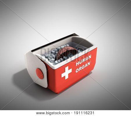 Organ Transportation Concept Open Human Organ Refrigerator Box Red 3D Render On Grey Background