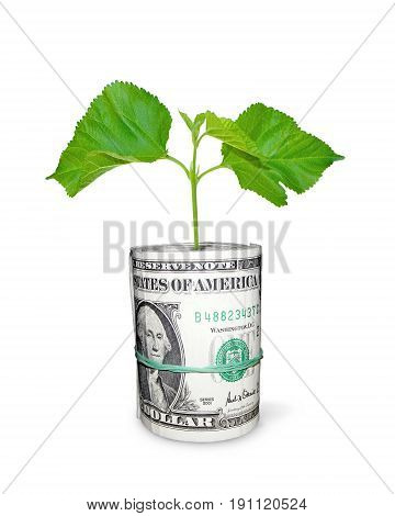 photography in stiletto of the metaphor about investment financial business with scene of the sprout tree and packs of the dollar banknotes