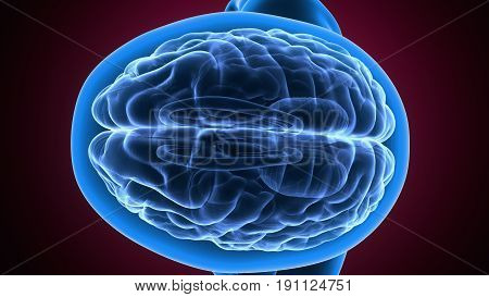 3d illustration of human body brain anatomy