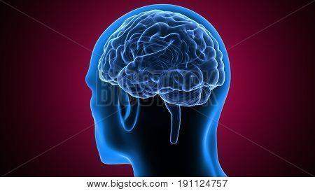 3d illustration of human body brain anatomy