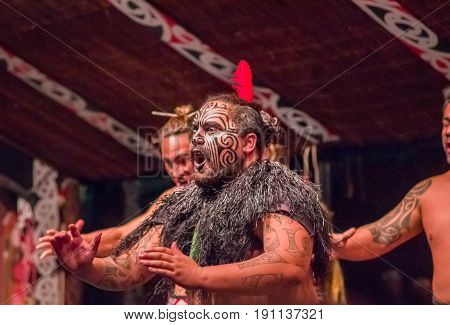 NORTH ISLAND, NEW ZEALAND- MAY 17, 2017: Close up of a Tamaki Maori leader man dancing with traditionally tatooed face and in traditional dress at Maori Culture wearing a red feather in his head, Tamaki Cultural Village, Rotorua, New Zealand.