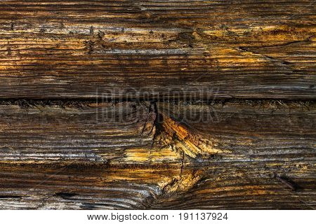 wooden background from the old pine-tree boards
