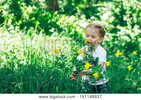 Little girl in the middle of flower plantation and birch forest