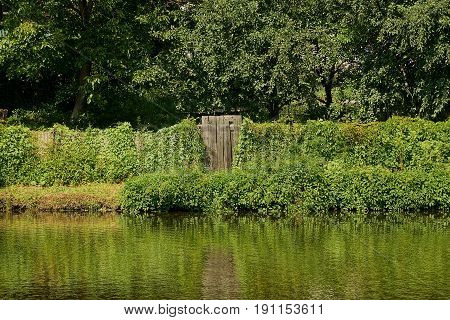 Gray wooden gate and a fence overgrown with greenery on the shore of the reservoir