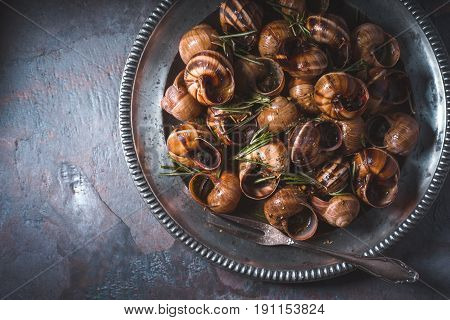 Burgundy snails with rosemary on the stone background horizontal