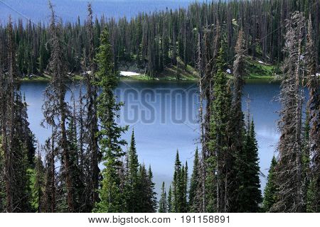 The lake in Wyoming surrounded by dead pines. Mountain pine beetle infestation.