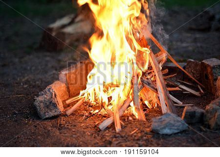 Campfire in the forest in summer in details