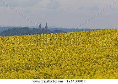 A vig canola field next to Schwandorf in bavaria in the back the church Kreuzberg Kirche