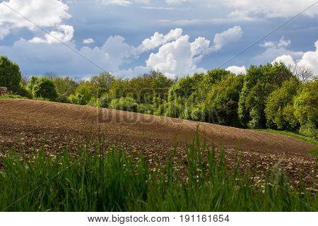 field - summer landscsape next to schwandorf in bavaria