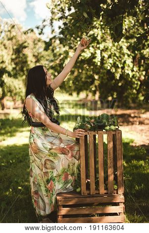 Woman In Colorful Maxi Dress With Box With Apples In A Sunny Gar