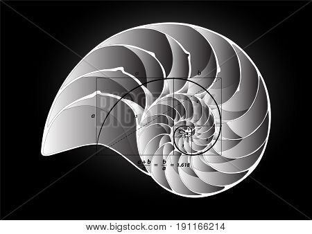 Golden section perfect proportion on shell, vector illustration