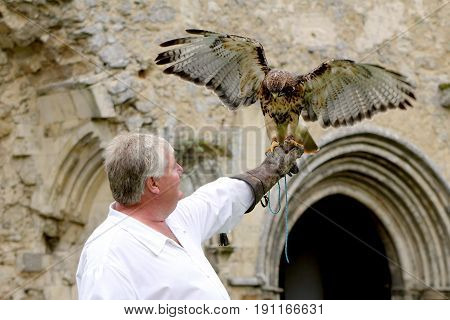 Beaulieu, Hampshire, Uk - May 29 2017: Falconer With His Buzzard Demonstrating Falconry