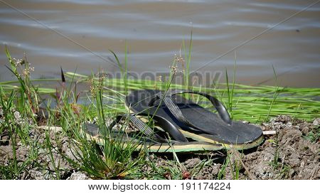 Pair of slippers by rice field dike A pair of black slippers left in a dike by the rice field