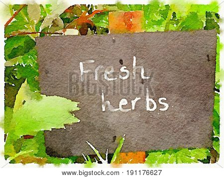 Digital watercolor painting of a chalk sign with Fresh Herbs written on it. Surrounded by herbs and space for text.