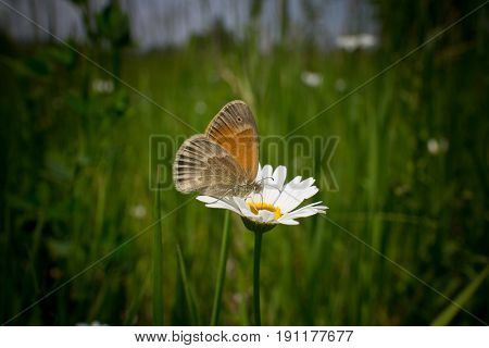 Butterfly collecting food on flower at sunny day and out of focus background
