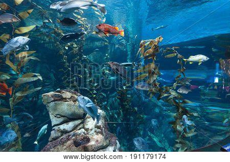 Exotic marine animals swimming in an aquarium in Toronto Canada